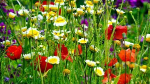 flower-meadow-5270651__340.jpg